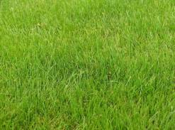 grass thick