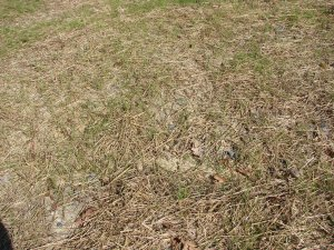 Partial Mulch-Grass